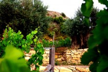 ezousa winery lemona