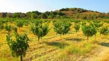 fikardos winery