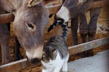 golden donkeys farm skarinou