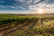 makkas winery statos