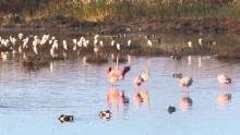 oroklini lake larnaca