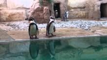 paphos zoo penguins
