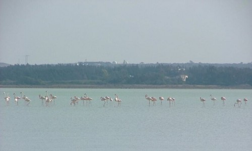 Limassol salt lake