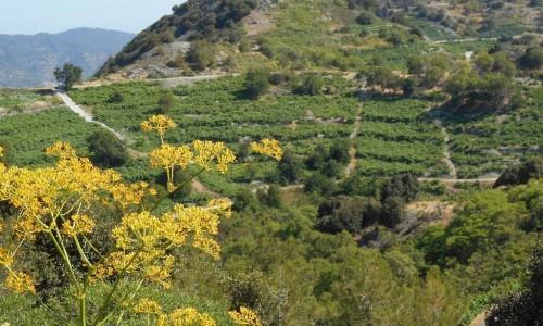 Petros Vanezis Nature Trail