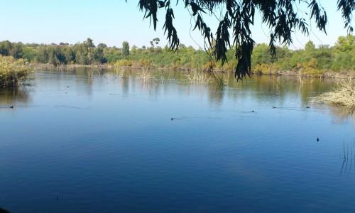 Athalassa Lake