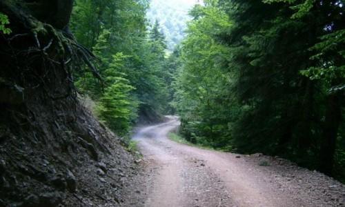 Cedar Valley (Koilada ton Kedron)