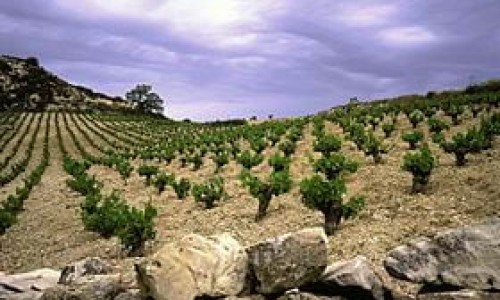 Cyprus Wine Routes and Wineries