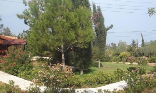 Pano Polemidia, Limassol