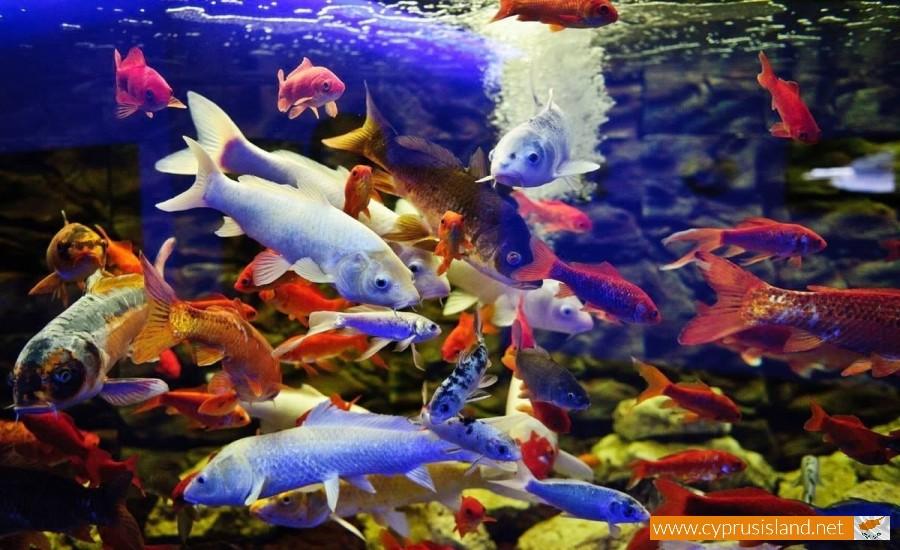 aquarium protaras
