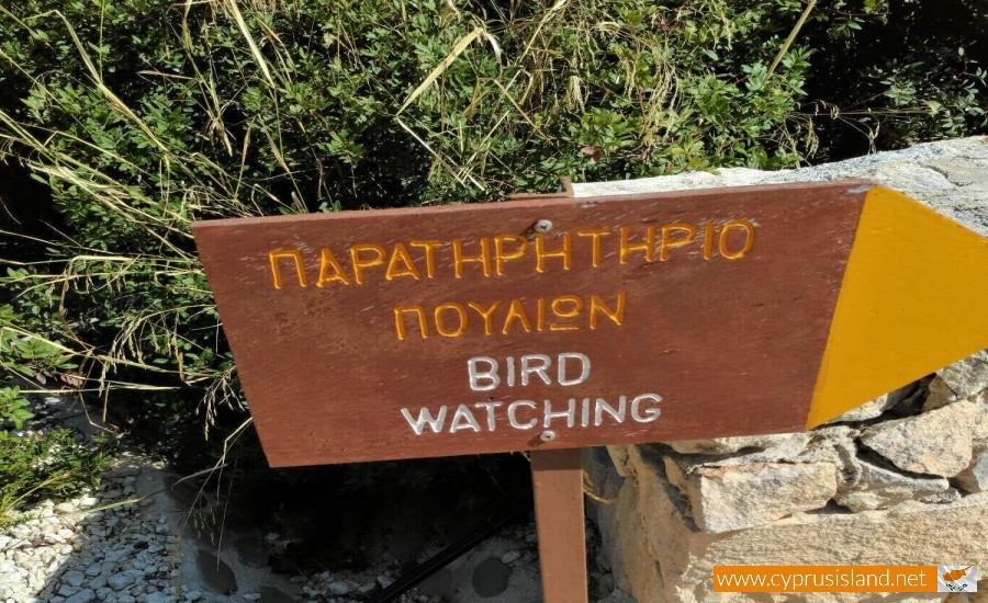 Baths of Aphrodite bird watching