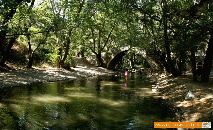 forest of paphos