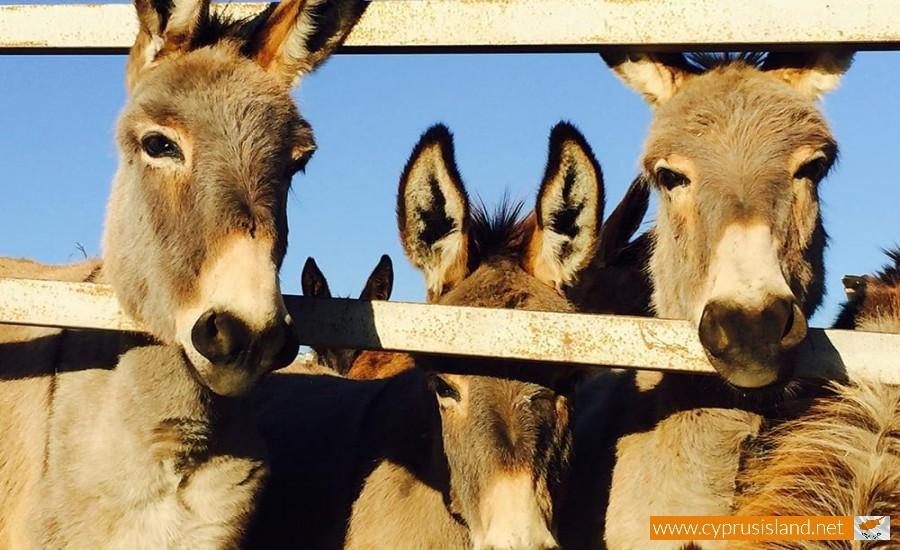 golden donkeys farm cyprus