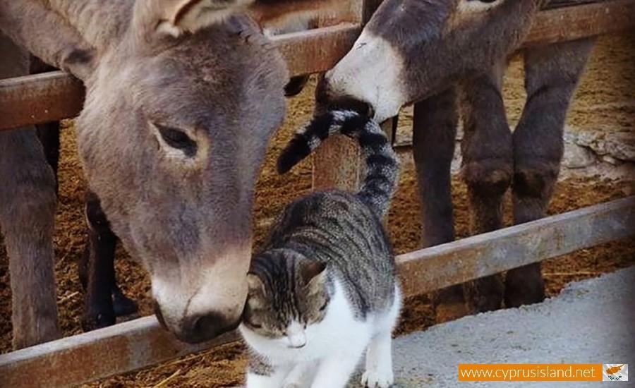 golden donkeys farm skarinou