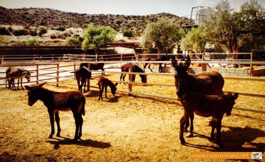 golden donkeys farm