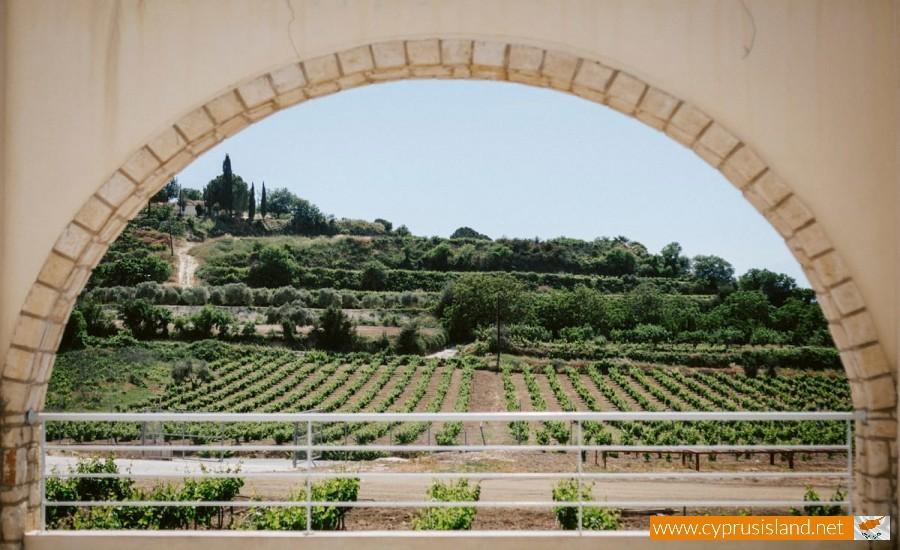 kamanterena paphos winery