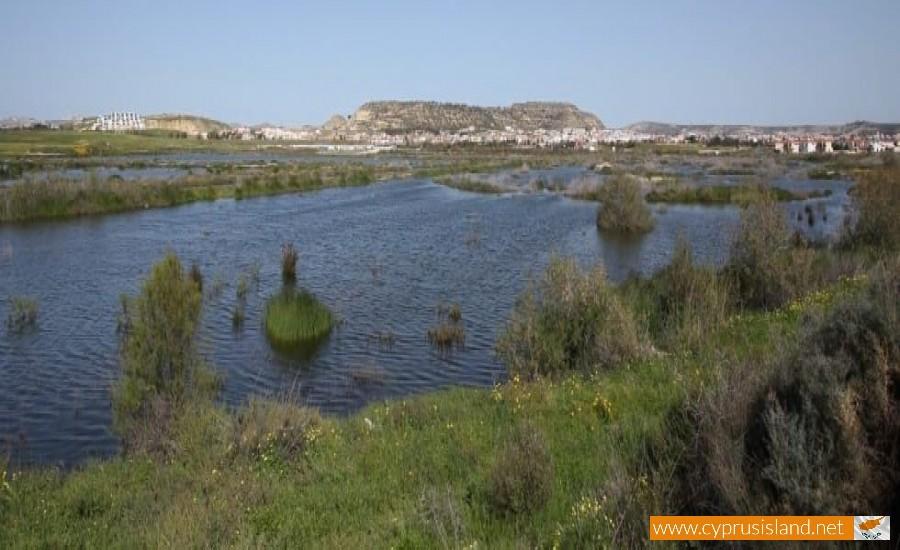 larnaca lake cyprus