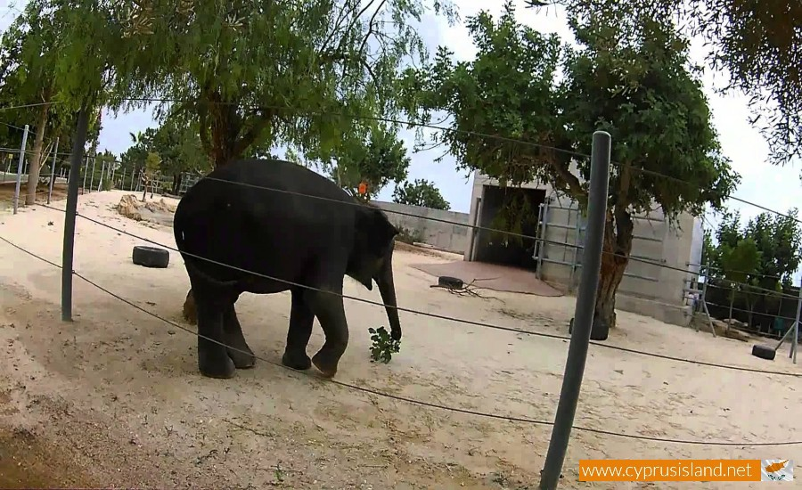 paphos zoo elephant