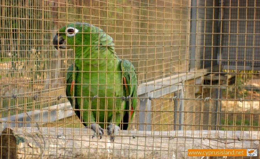 paphos zoo parrot