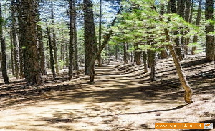 persefoni nature trail