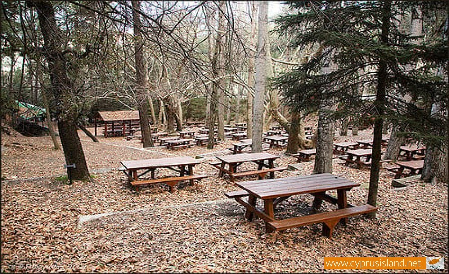 platania picnic site