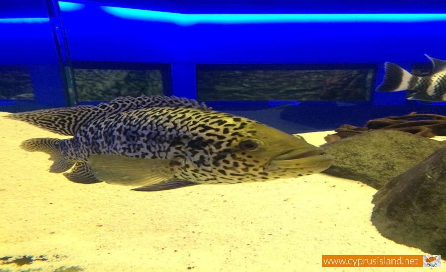 protaras aquarium