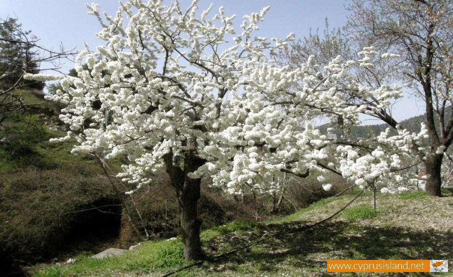 spylia nature trail