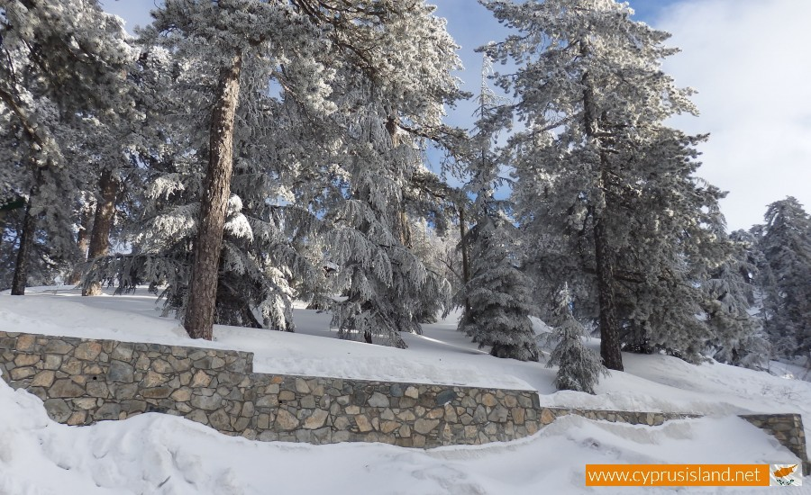 troodos mountain forest