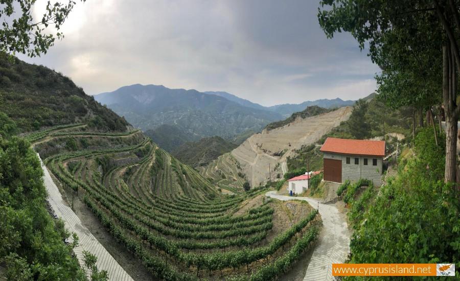 tsiakkas winery limassol