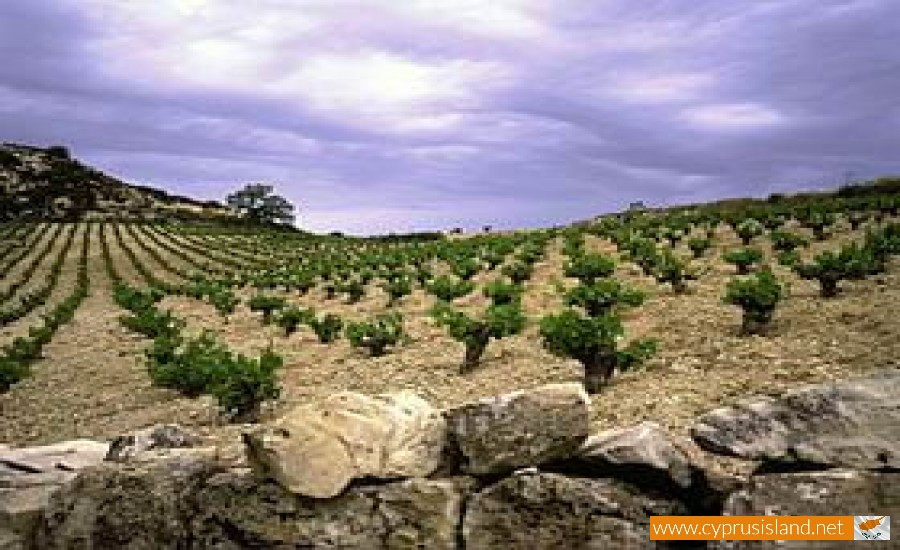 cypriot wines