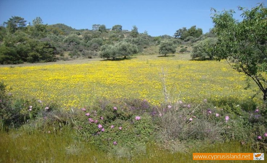 cyprus nature field