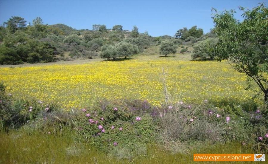 cyprus nature field