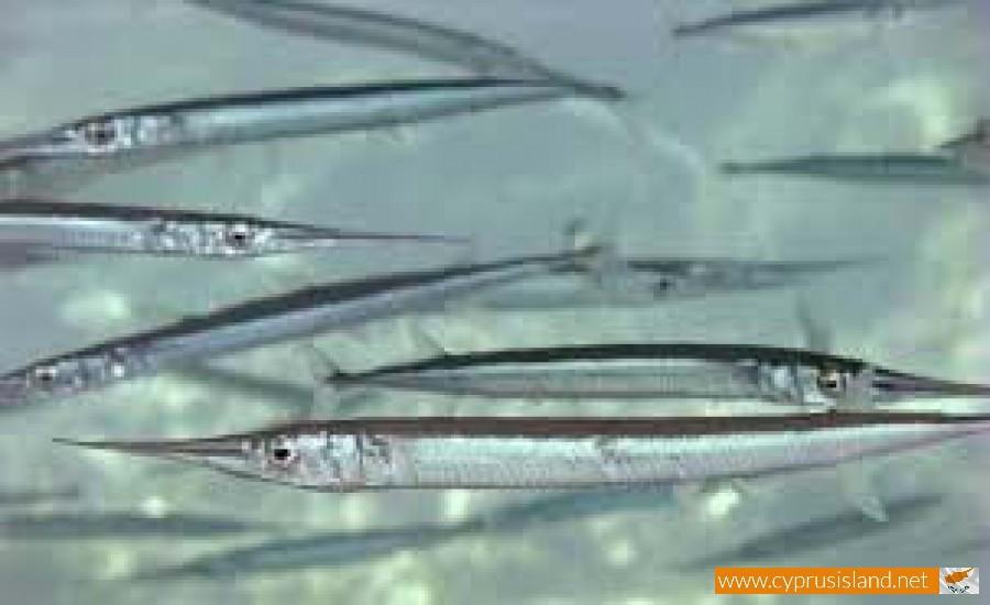 fish garpike