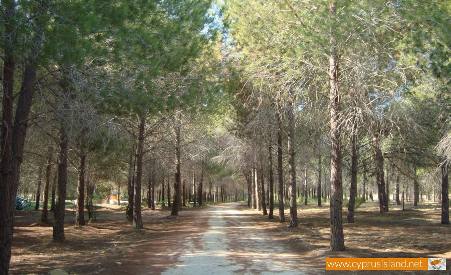 forest-nicosia