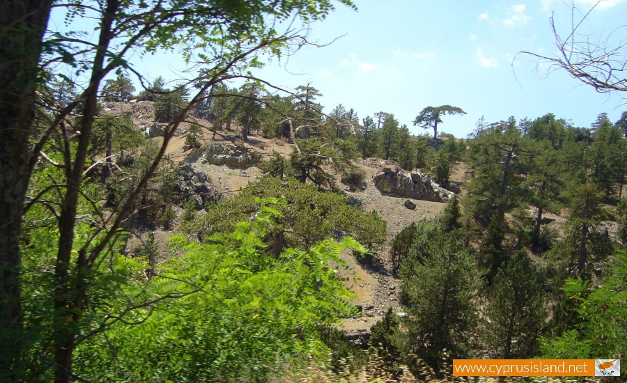 forest-troodos