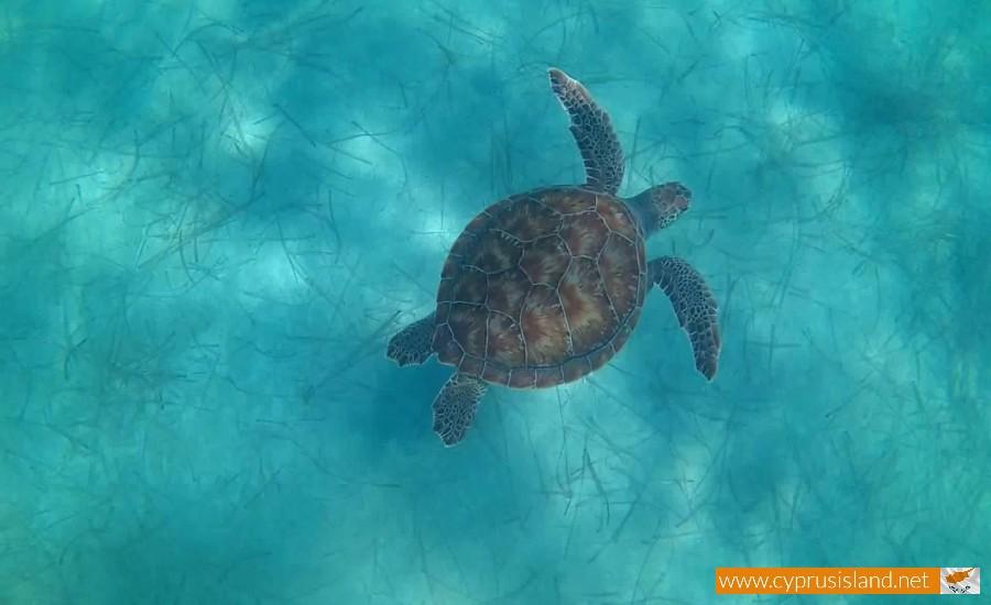 turtles cyprus beach
