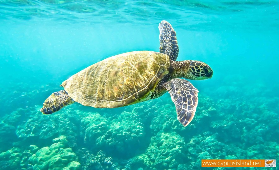 turtles in cyprus
