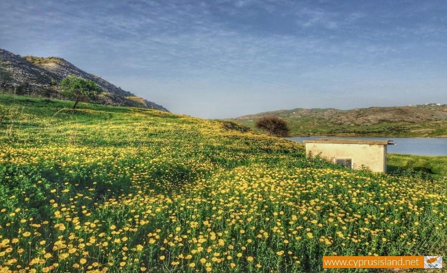 foinikas village cyprus