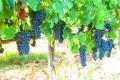 fikardos winery paphos