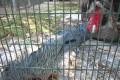paphos zoo cockatoo